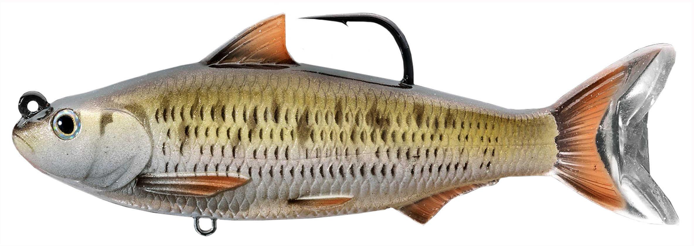 "LiveTarget Lures Common Shiner Swimbait Freshwater, 6"" Length, 1'-12' Depth, 2 1/4 oz Weight, Silver/Bronze, Per 1 Md: C"