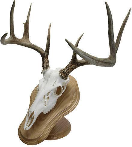 Walnut HollowWalnut Hollow Deluxe Euro Skull Display Kit Oak