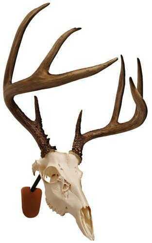 Walnut HollowWalnut Hollow Euro Skull Mount Kit Model: 41852